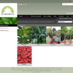 Floramiata Catalogo
